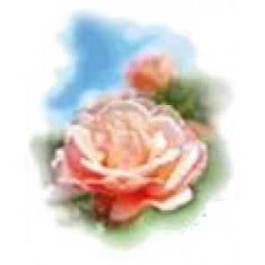 Medisana Aromatična ulja za ovlaživače zraka ruža 10ml